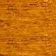 CAL - Dąb złoty (Dąb)